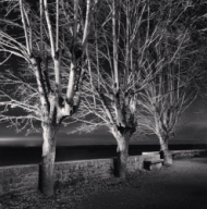 """Midnight Trees, Mont St. Michel, France. 2004"""